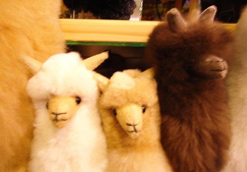 alpaca de pelucia nova zelandia