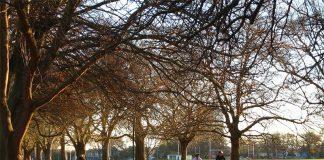 hagley park em christchurch nova zelandia