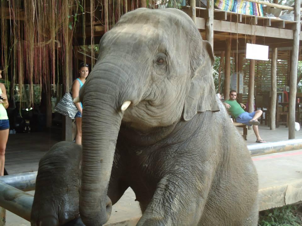 Elephant Nature Park em Chiang Mai gigante