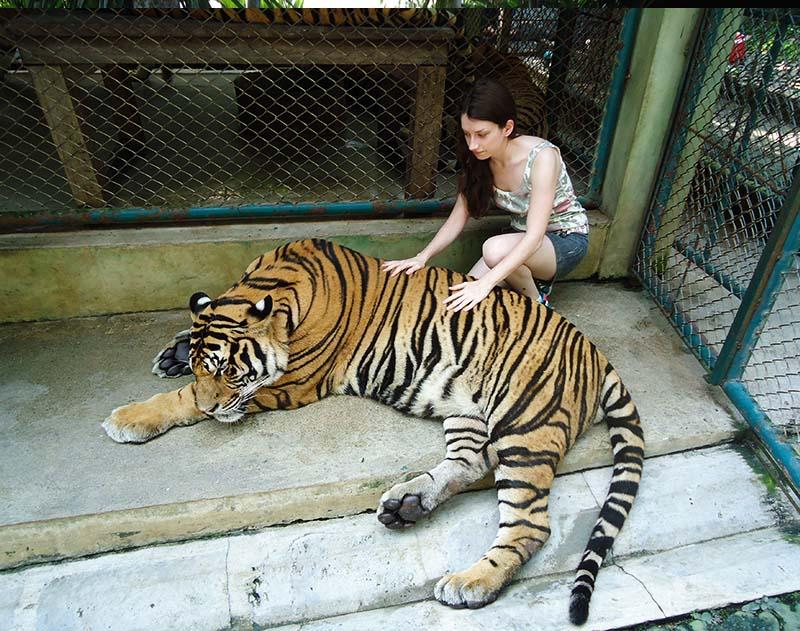 como é a visita ao tiger kingdom em chiang mai tailandia