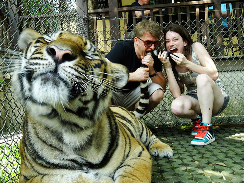 interacao tigres tiger kingdom tailandia