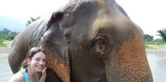 paque dos elefantes chiang mai tailandia turista