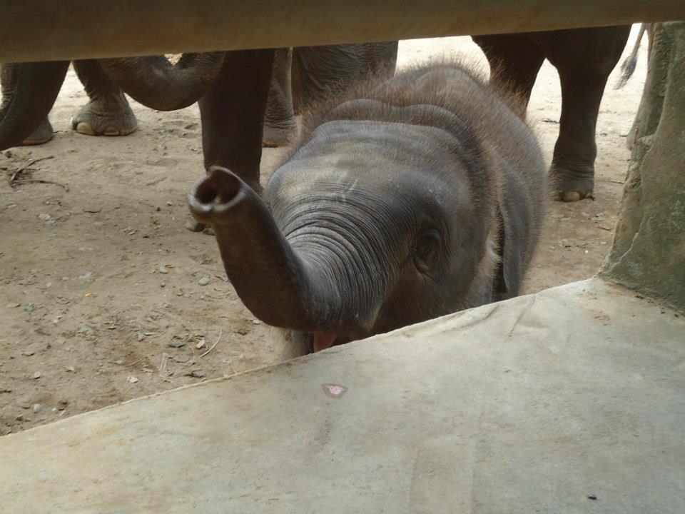 paque dos elefantes chiang mai tailandia