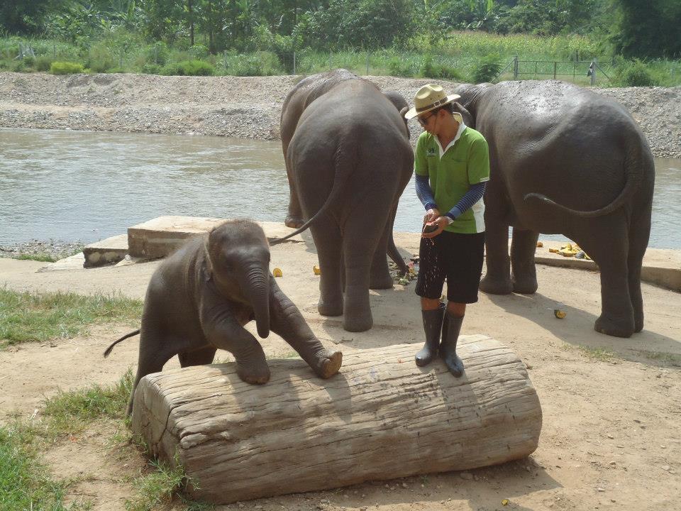 parque elefante tailandia chiang mai (1)