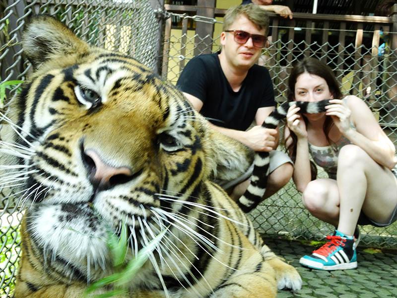 parque tigres na tailandia chiang mai