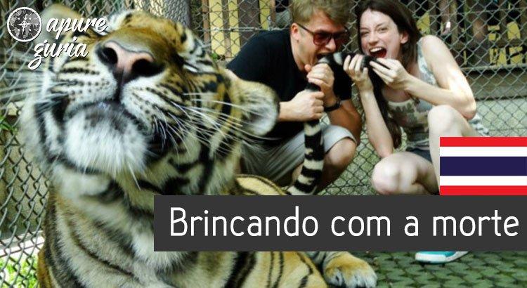 tiger kingdom tailandia chiang mai tigres
