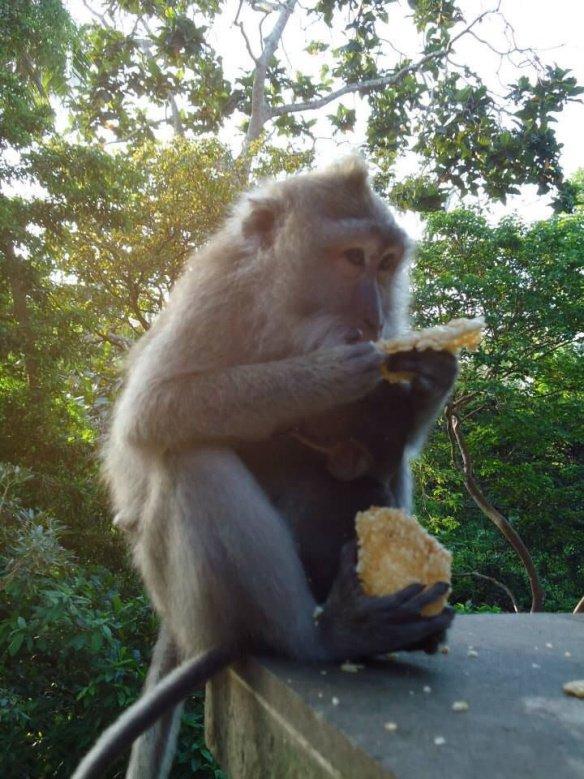 ataque macacos em bali
