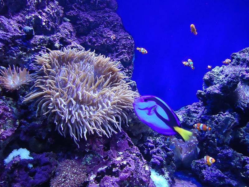 achei dory aquario de cingapura
