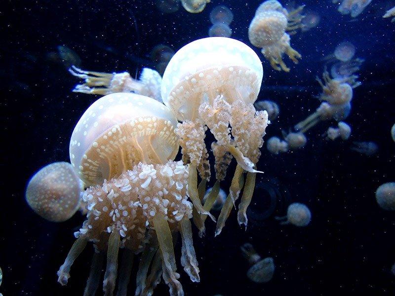 agua viva aquario cingapura