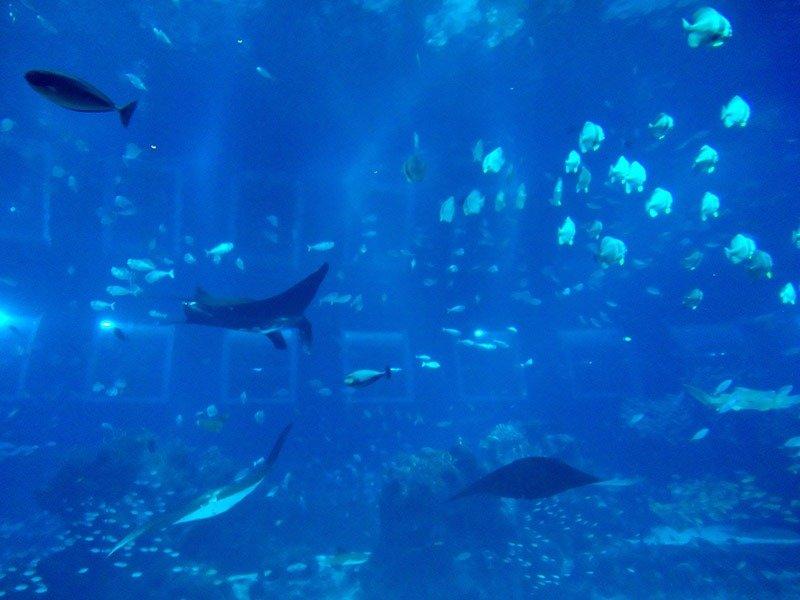 maior aquario do mundo oceanario de cingapura