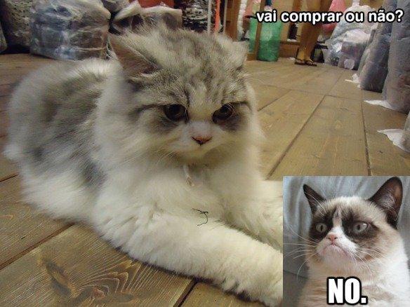 coisas-bizarras-asia-gato-amarrado