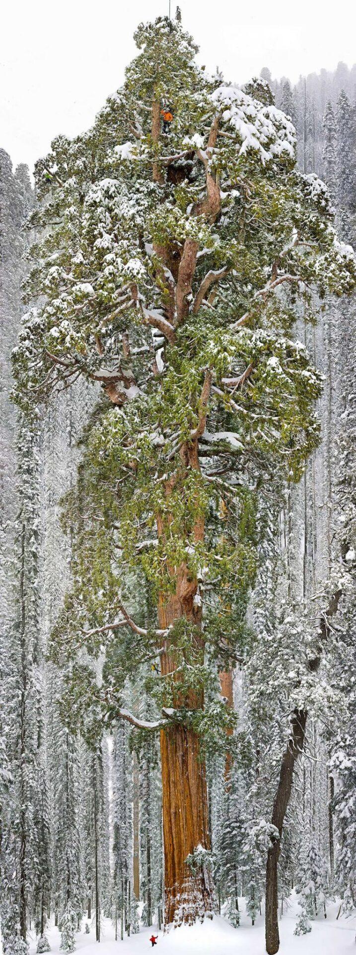 11 lugares que te fazem se sentir insignificante 2 sequoia park california