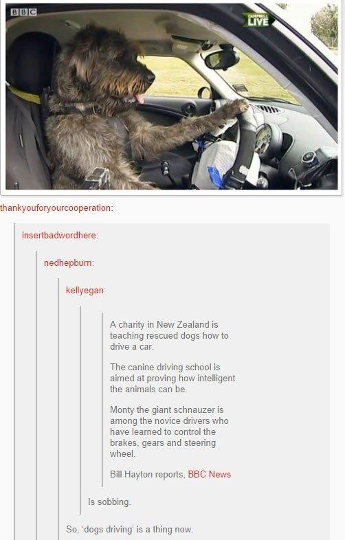 fatos bizarros da Nova Zelândia auto escola de caes