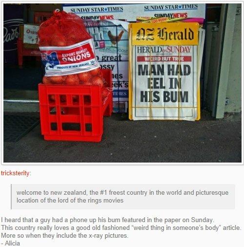 fatos bizarros da Nova Zelândia enguia na rua 2