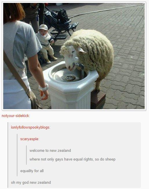 fatos bizarros da Nova Zelândia igualdade ovelhas