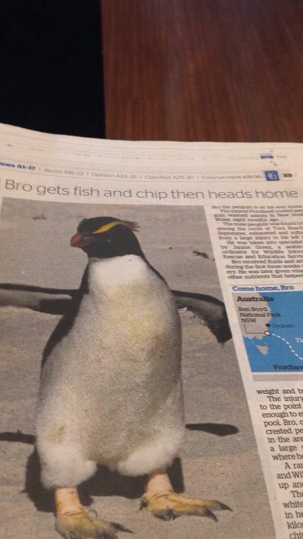 fatos bizarros da Nova Zelândia jornais 3