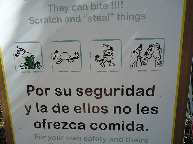 placa quatis puerto iguazu cataratas parque nacional iguazú