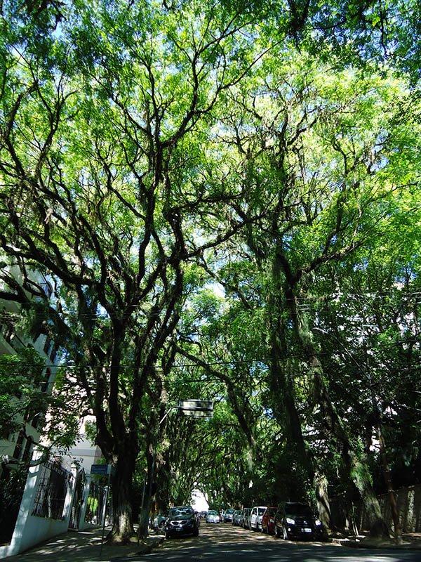 A rua mais bonita do mundo fica em Porto Alegre (2)