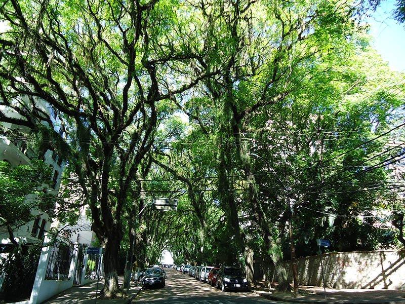 A rua mais bonita do mundo fica em Porto Alegre (3)