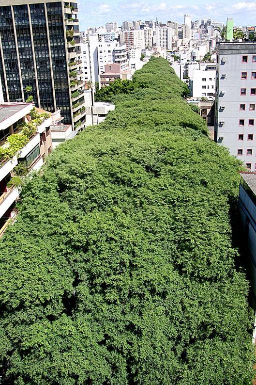 A rua mais bonita do mundo fica em Porto Alegre (4)