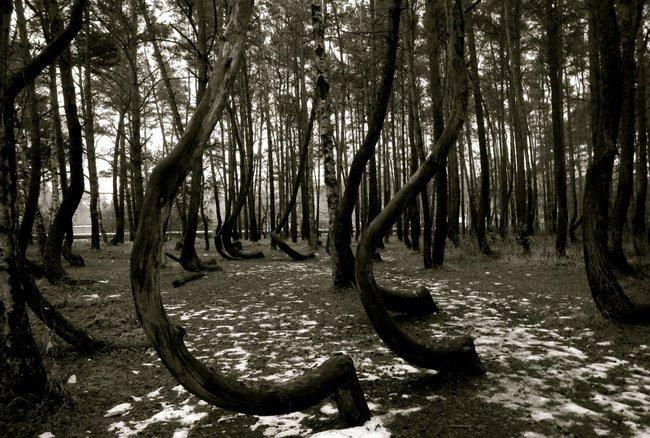 crooked forest 20 lugares surreais que você não vai acreditar que existem