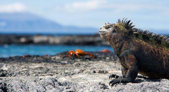 ilhas galapagos snow 20 lugares surreais que você não vai acreditar que existem