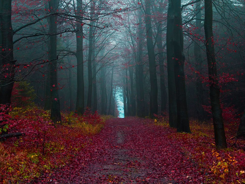 schwarzwald 20 lugares surreais que você não vai acreditar que existem