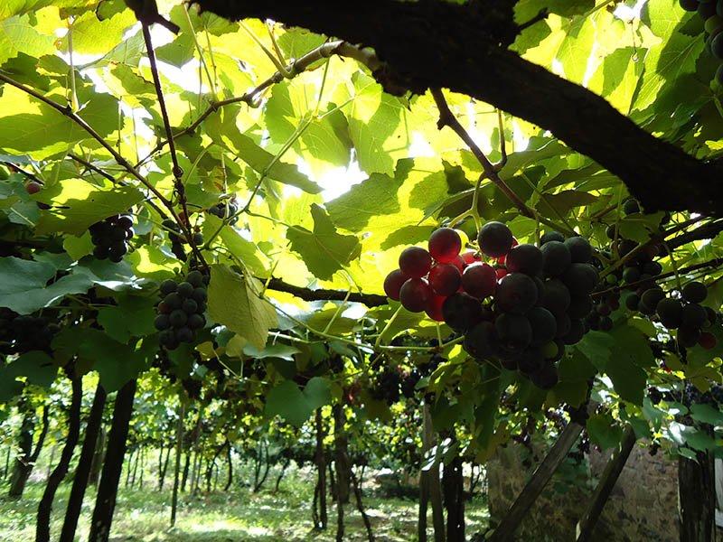 Rota Caminhos de Pedra em Bento Gonçalves cantina strapazzon uva