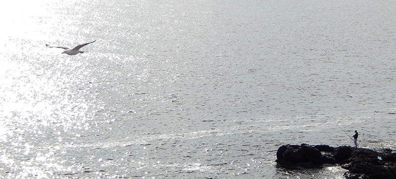 punta ballena punta del este uruguai pescador gaivota