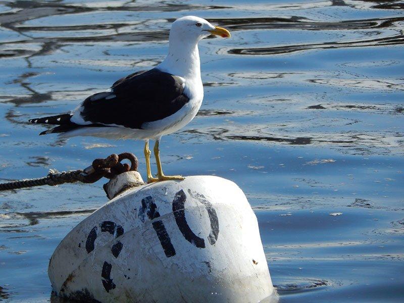 Punta del Este Roteiro 1 dia porto gaivota