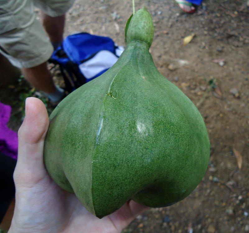 Tour 4 Islands em Krabi na Tailândia coco bizarro