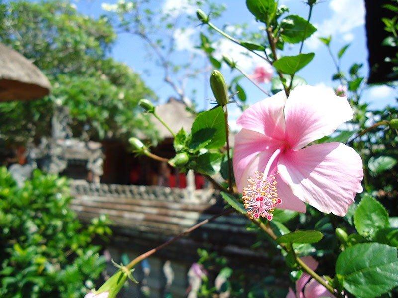 templos-bali-indonesia-apure-guria-flor