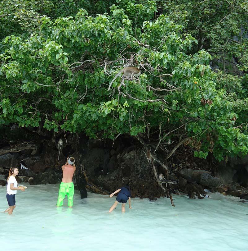 monkey island macacos Koh Phi Phi