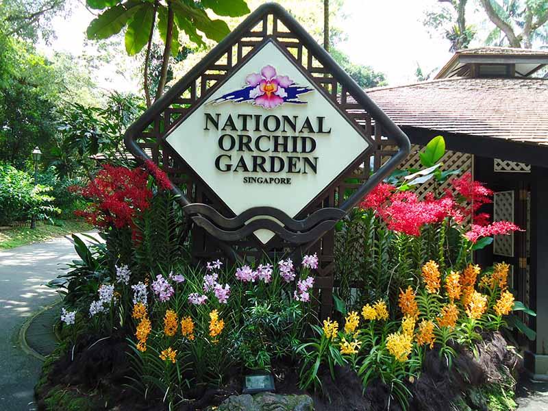 guia cingapura jardim botanico orquideas
