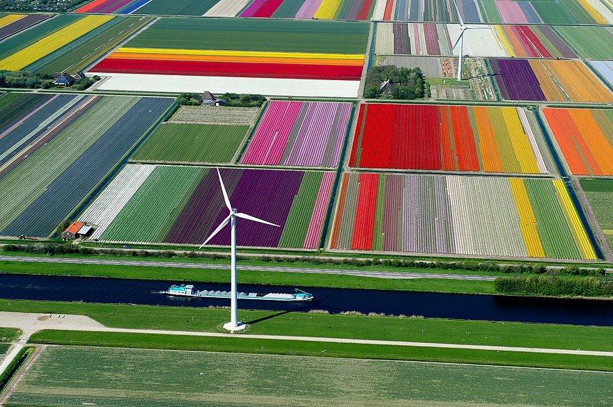 campos-de-tulipa-fotografia-aerea