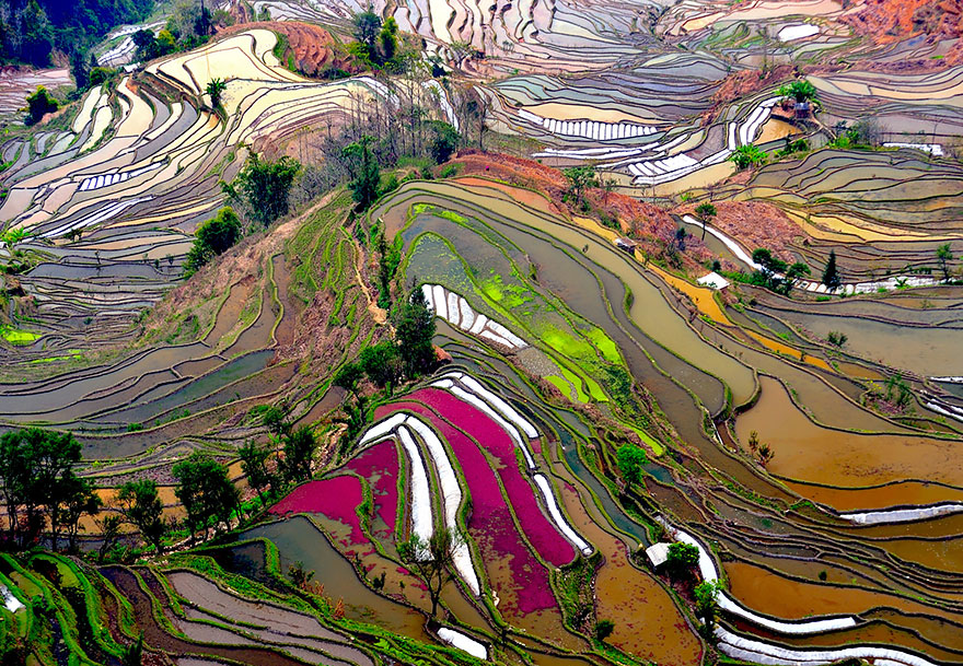 china-campos-de-arroz-fotografia-aerea