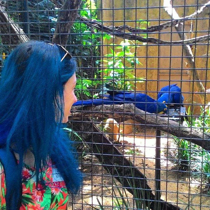 o que fazer em foz do iguaçu em 2 dias parque das aves arara azul