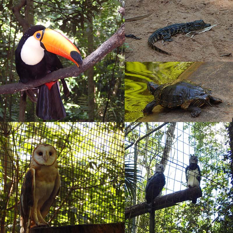 parque-das-aves-foz-do-iguaçu