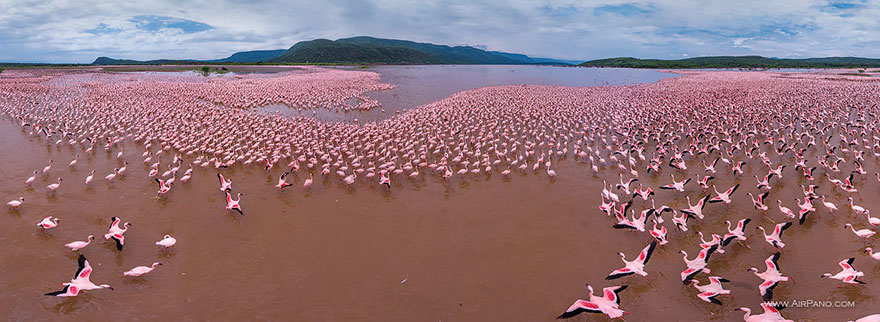 lugares incríveis quenia-flamingo-bay-fotografia-aerea