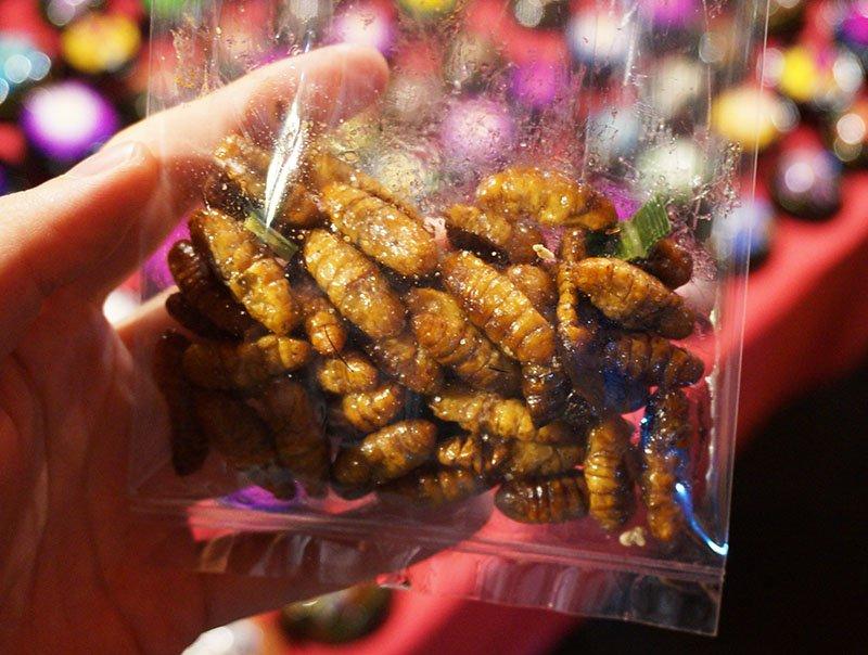 Mochilão a melhor coisa que já me aconteceu comer inseto