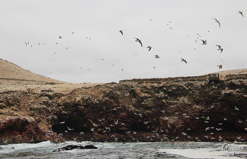 ilhas ballestas infestada aves