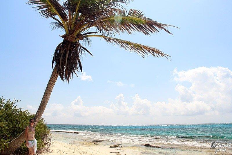 johnny cay san andres palmeiras