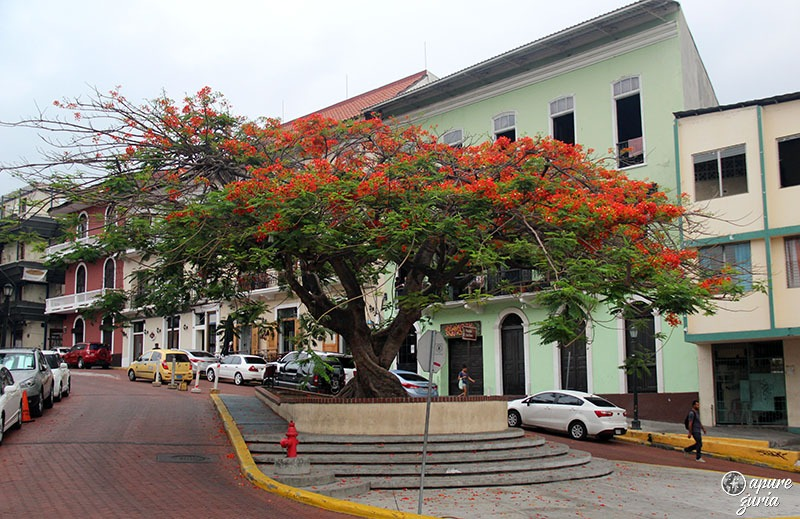 casco viejo panama city arvore