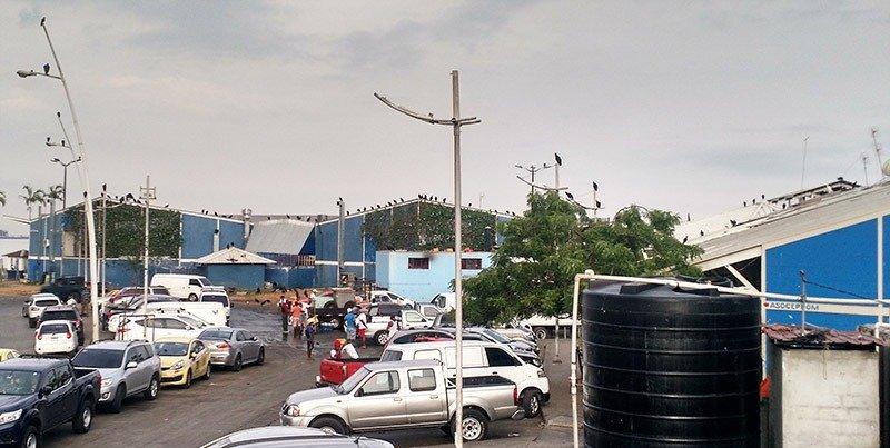 urubus mercado de peixes panama