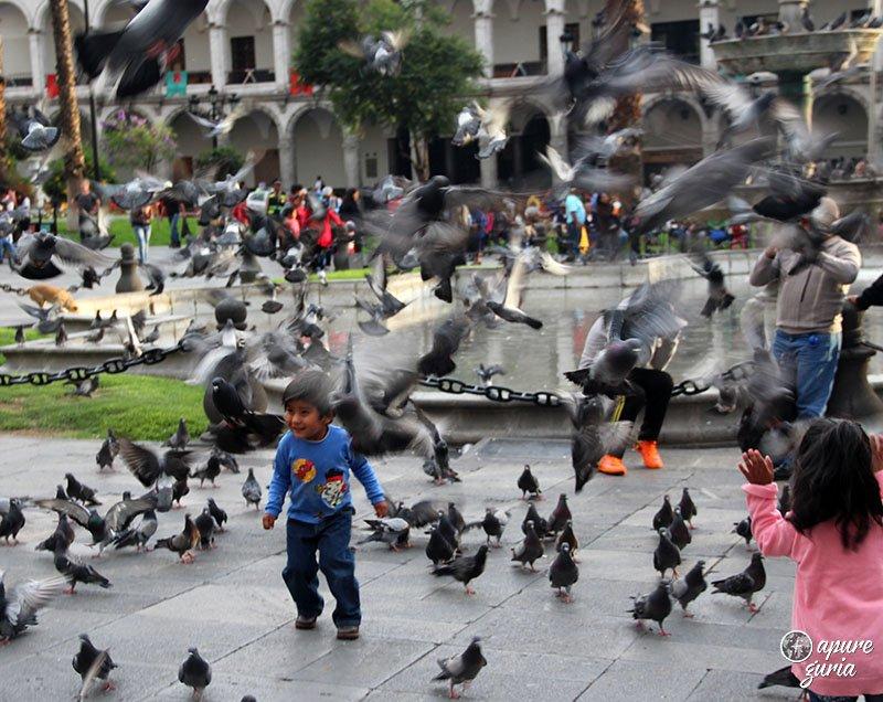 pomba plaza de armas arequipa