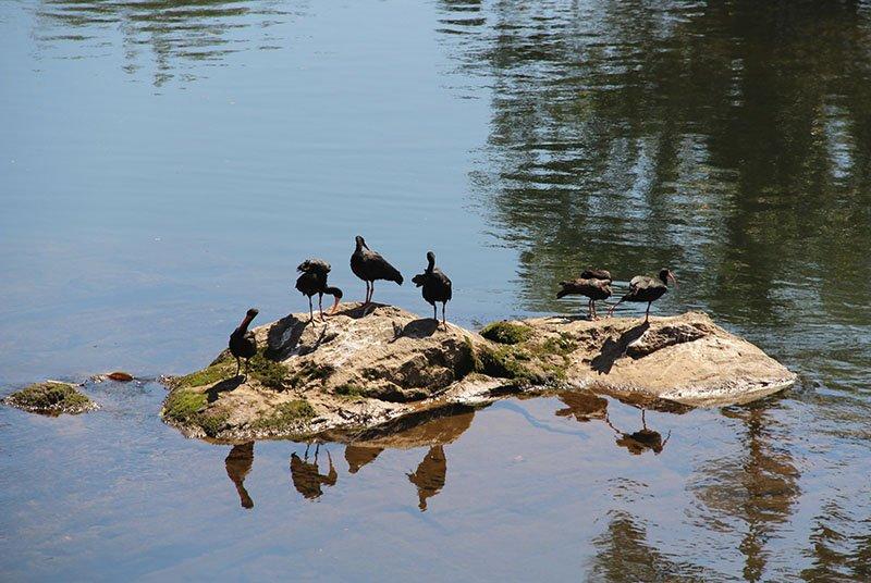 aves morretes rio marumbi