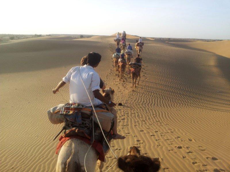 camelo-dromedrario-jaisalmer-deserto
