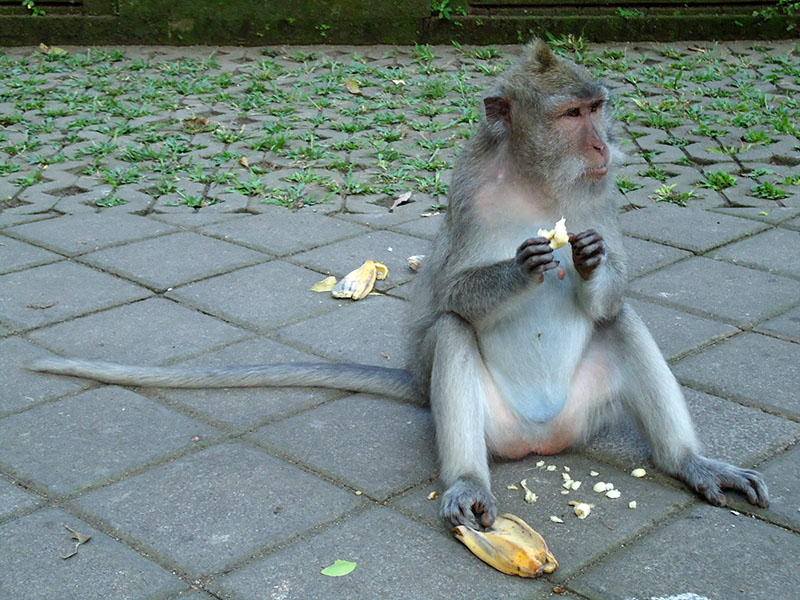 o-que-fazer-em-bali-templo-dos-macacos