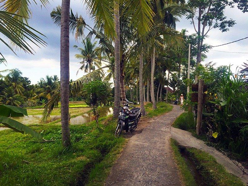 ubud-bali-plantacoes-de-arroz