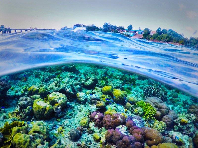 wakatobi-snorkel-corais-indonesia